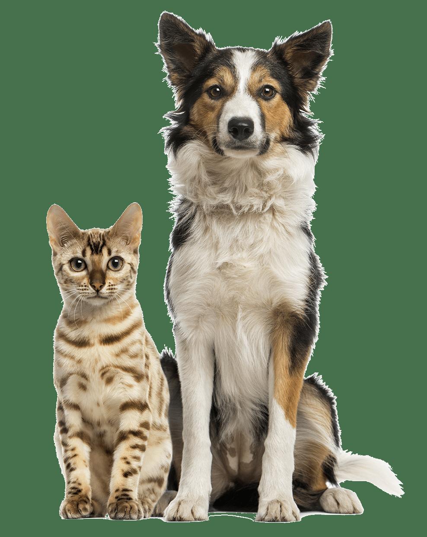 Dog Walker in Birmingham AL - Poodah's Dog Walking and Pet Sitting Services