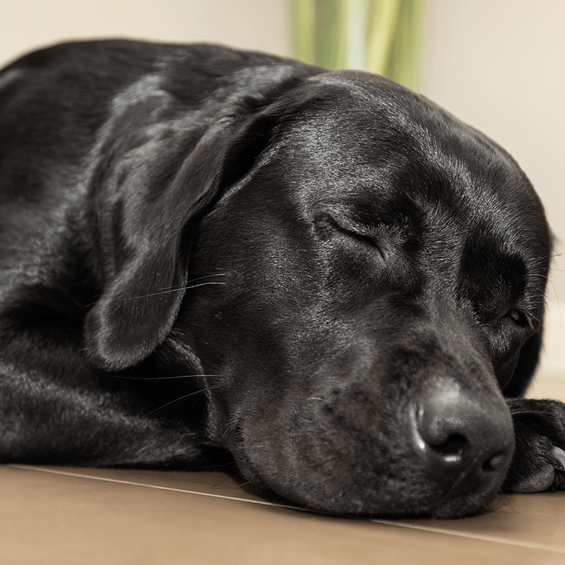 Poohdah's Dog Walking and Pet Sitting Services - Birmingham Overnight Pet Sitting Services - 800px
