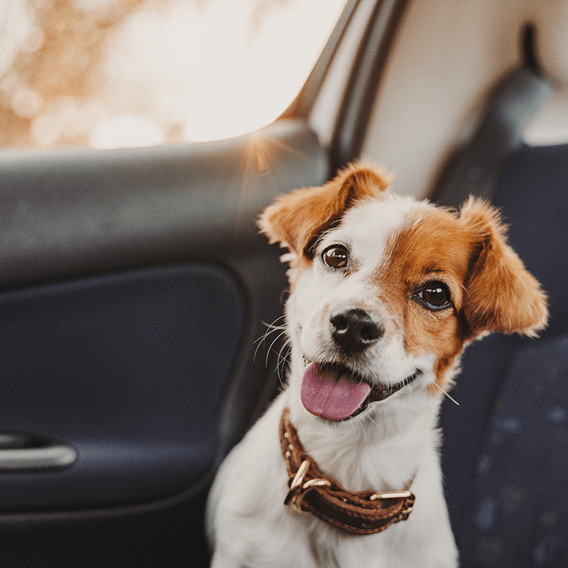 Poohdah's Dog Walking and Pet Sitting Services - Birmingham Pet Taxi Service - 800px