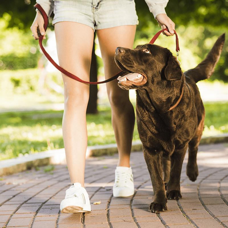 Poohdah's Dog Walking and Pet Sitting Services - Birmingham Dog Walking Service - 800px