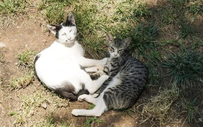 4 Healthy Tips for Cats in Hot Weather