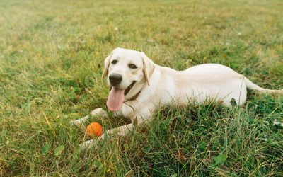 5 Common Pet Injuries and How to Prevent Them During the Summer Months